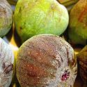 Ficus carica L.
